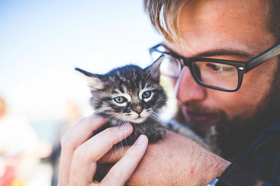 Gehalt Tierarzt Infos