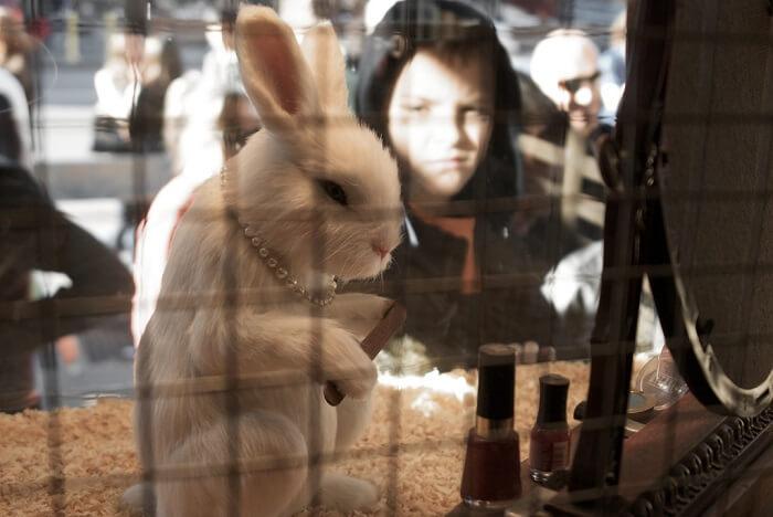 Tierversuche In Der Medizin Und Kosmetik