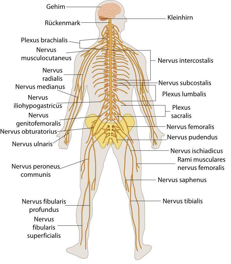Nervenarzt - der Facharzt für Neurologie - was macht ein Neurologe?