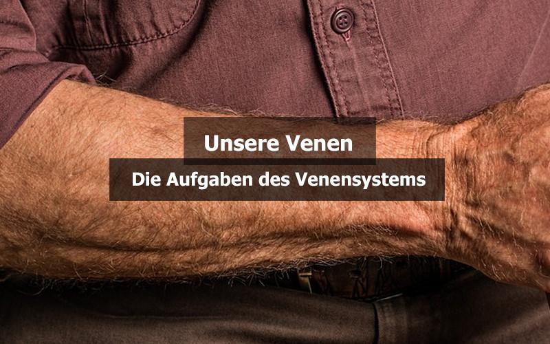Aufgaben Venensystem
