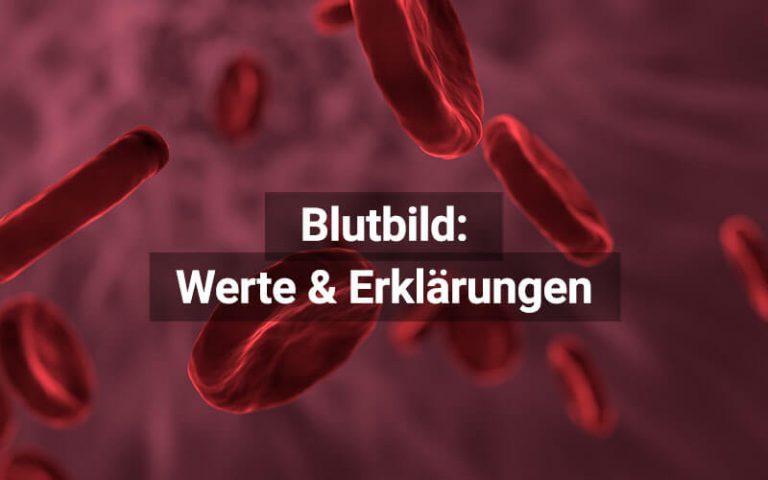Blutbild Blutwerte (1)