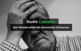 Cannabis Kein Wundermittel Bei Chronischen Schmerzen