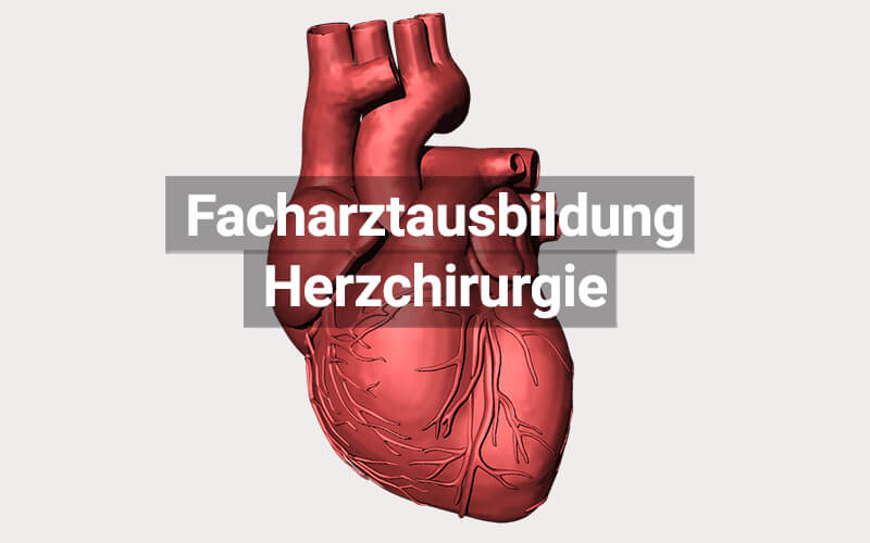 Facharztausbildung Weiterbildung Herzchirurgie