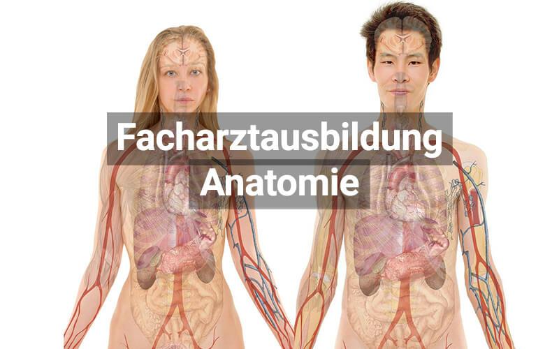 Facharztausbildung Anatomie