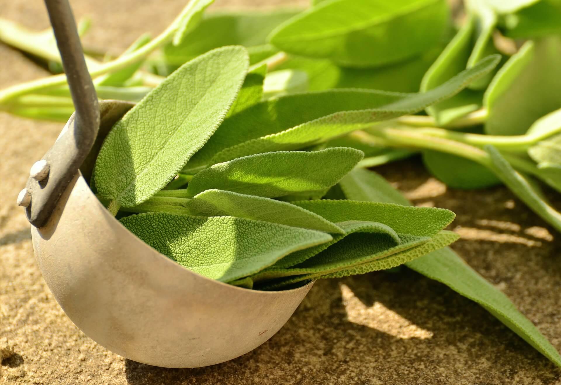 Bei Erkältung: Salbei Tee