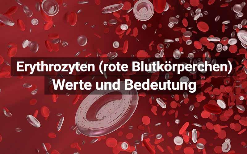 Erythrozyten Rote Blutkörperchen