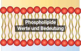 Phospholipide