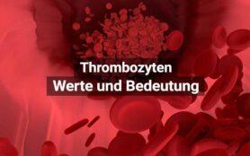 Thrombozyten