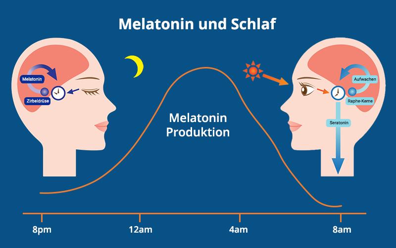 Melatonin Und Schlaf